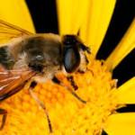 abejas, miel